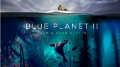 Blue Planet II Exclusive Premiere in Bristol Review