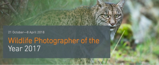 Wildlife Photographer of the Year 2017 at M Shed from Saturday 21st October 2017 - Sunday 8th April 2018