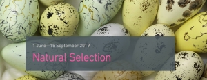 Natural Selection at Bristol Museum & Art Gallery from 1st June until 1st Sep