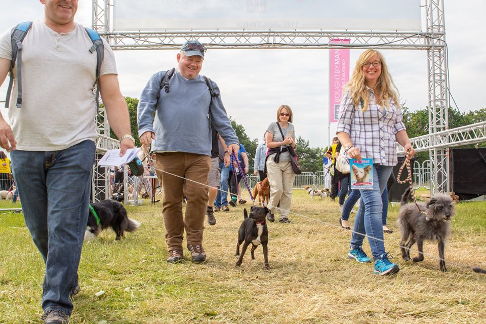DogFest West is back for 2020