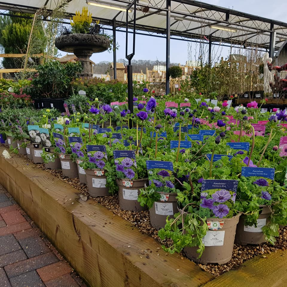 A List Of Bristol Garden Centres And When They Will Be Reopening