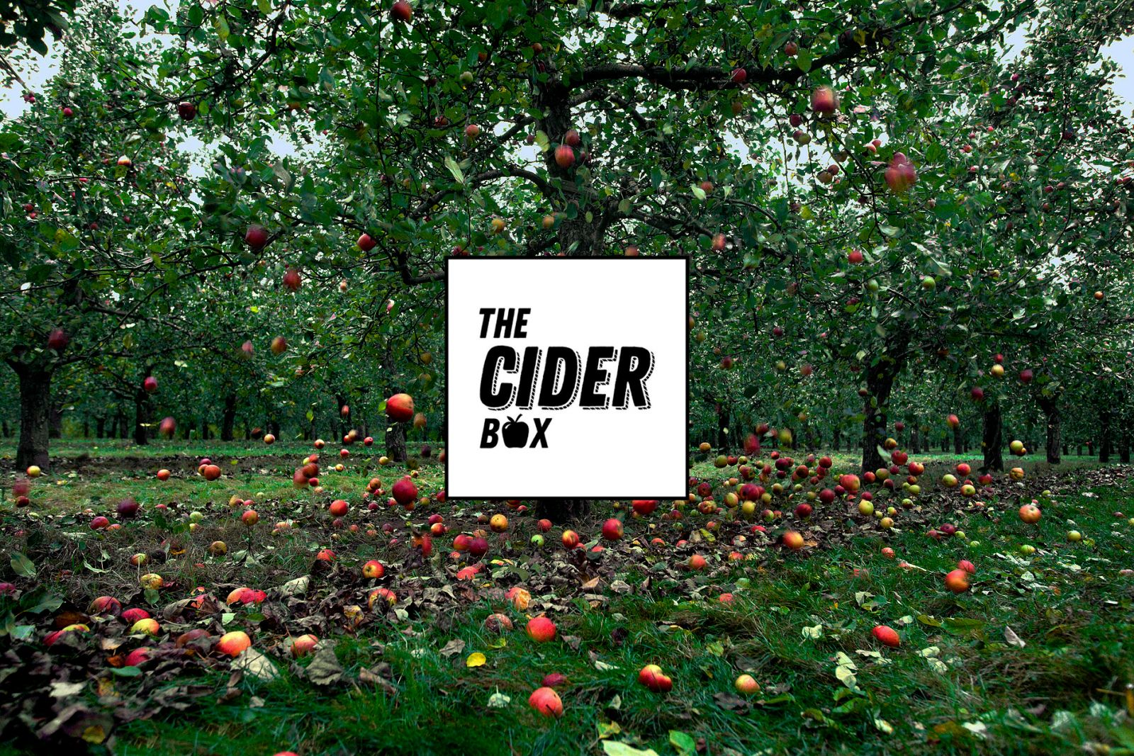 The Cider Box store.