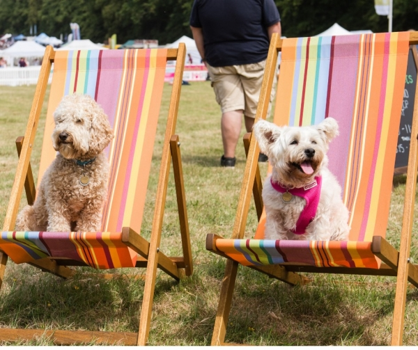 First details of DogFest West 2020 revealed