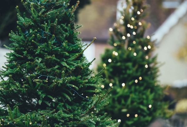 Local wholesalers Arthur David launch Christmas tree delivery service