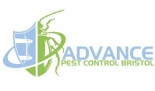 Getting to Know Advance Pest Control in Bristol
