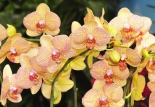 Limited spaces available for Orchid Talk at Almondsbury Garden Centre this April